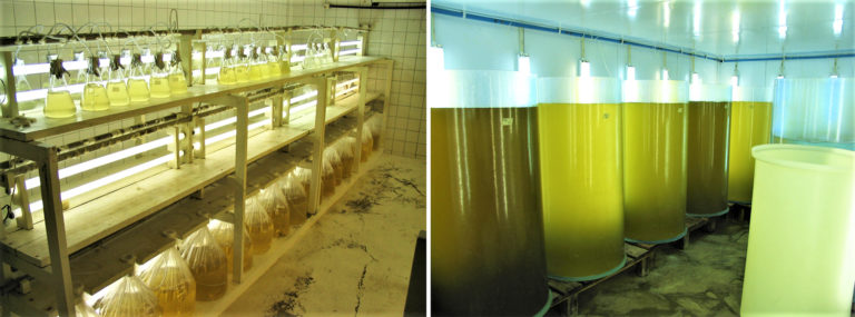Article image for Modeling microalgae production cost in aquaculture hatcheries