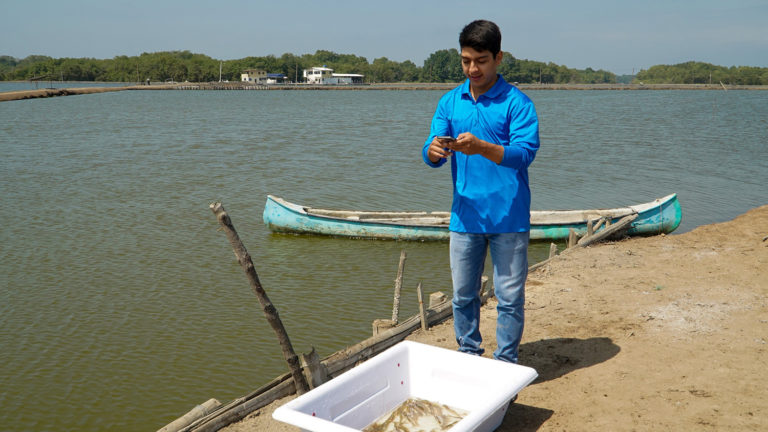 Article image for Shrimp farmers in Ecuador tap an app to seal a better deal
