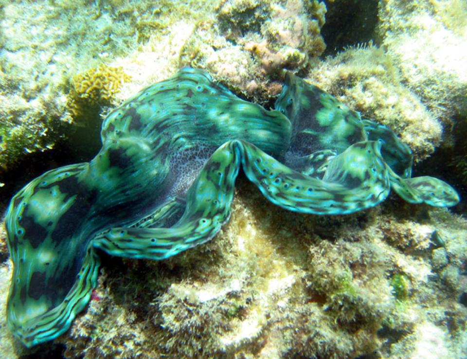 restorative shellfish mariculture