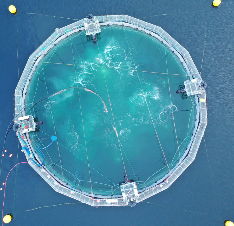 Article image for Not RAS, not net pens: Salmon farm concepts redefine barriers
