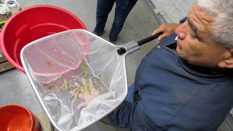 Article image for RAS shrimp producer may have found its field of dreams