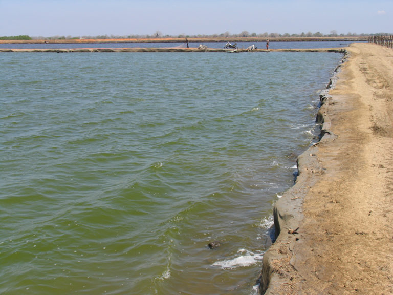 Article image for Dissolved and suspended solids in aquaculture systems