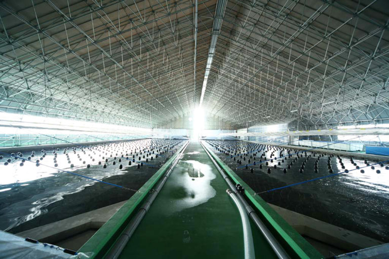 Article image for Power move: Japanese energy firm getting in on RAS shrimp