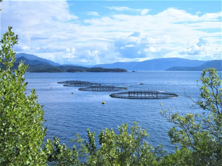 Article image for Cuantificación de las emisiones de gases de efecto invernadero de la acuacultura mundial