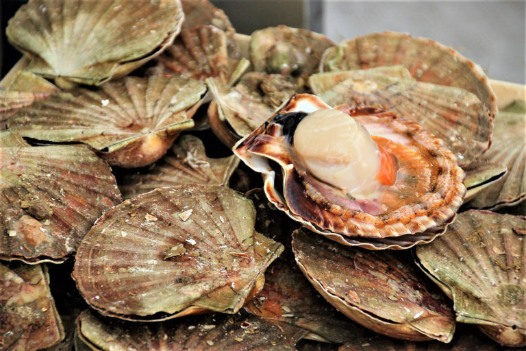 Article image for Utilization of feed and waste from salmon aquaculture by great scallop juveniles