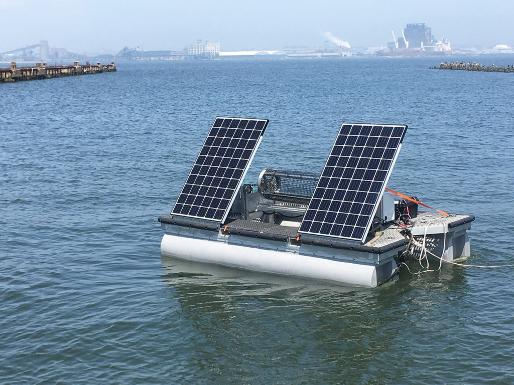 Article image for Here comes the sun: Oyster and algae growers harness solar power
