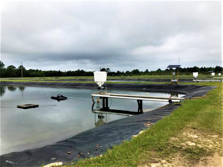 Article image for Respuesta del camarón blanco del Pacífico a diversas dietas distribuidas a demanda con alimentadores acústicos pasivos