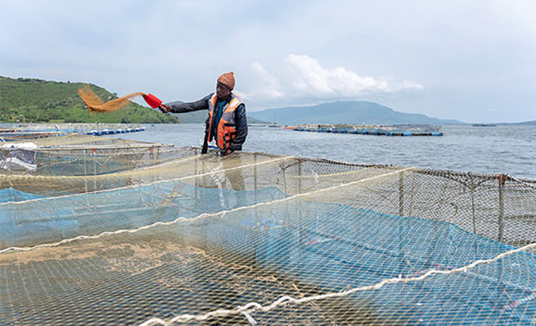 Article image for How resilient is aquaculture in the face of a pandemic?