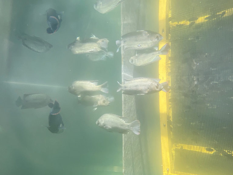 Article image for Going up: High hopes for a vertical aquaculture venture
