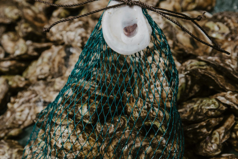 Article image for They sell shellfish shares by the seashore: A surge of oyster CSAs