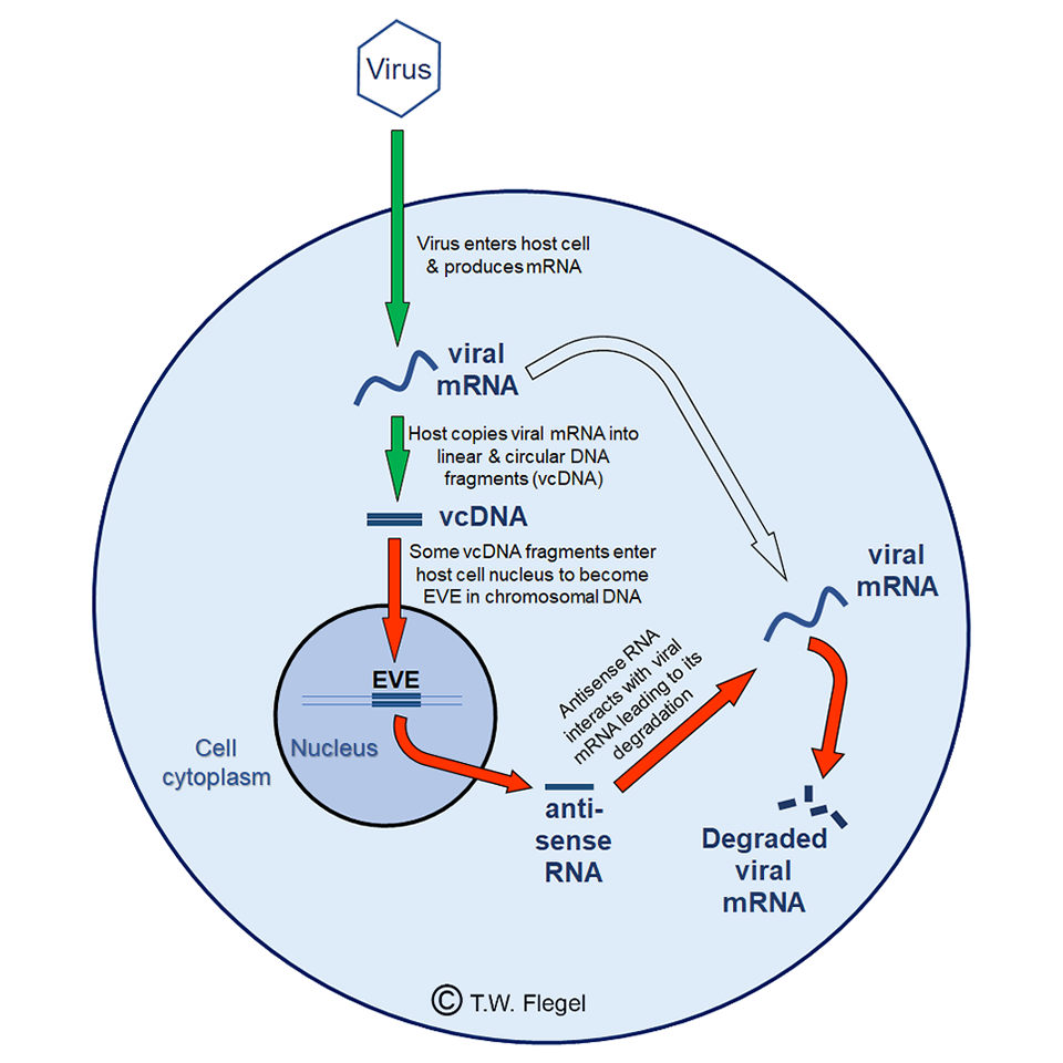 vacunas de ADN