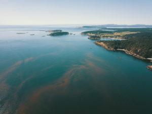 New technologies taking on harmful algal blooms