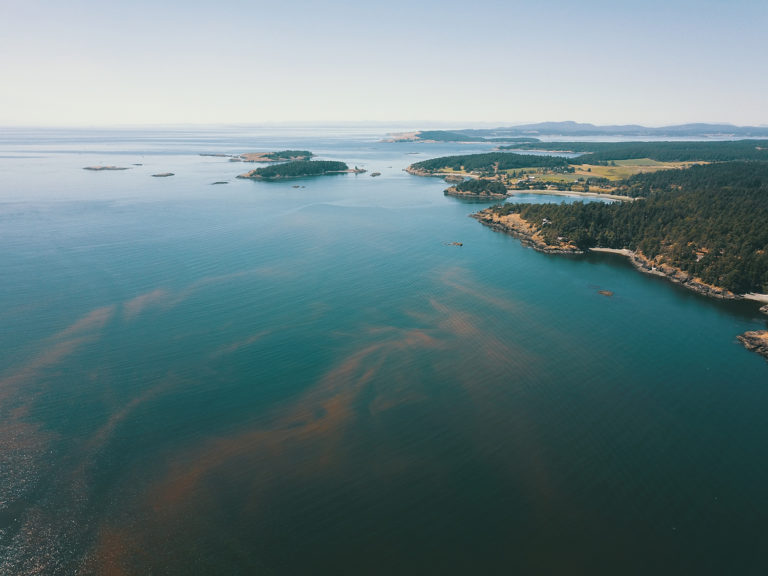 Article image for New technologies taking on harmful algal blooms