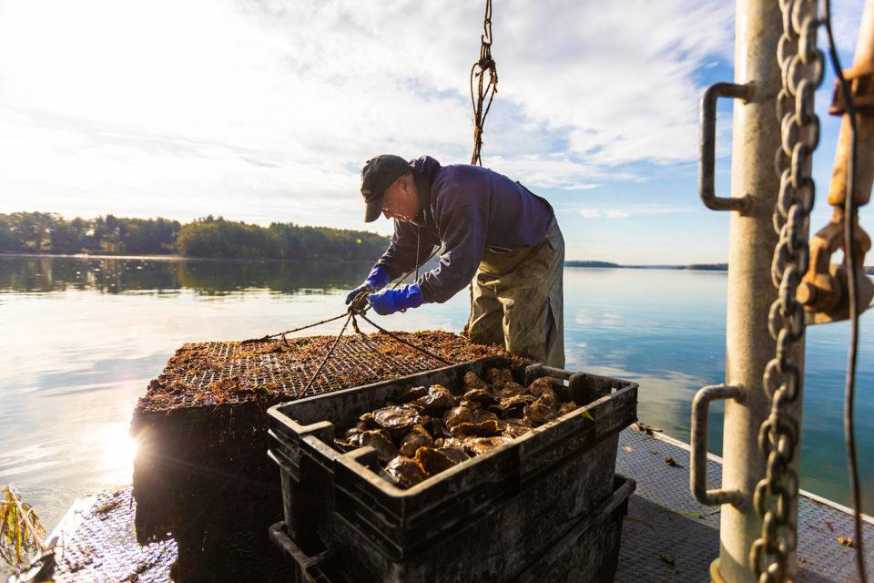 restorative aquaculture