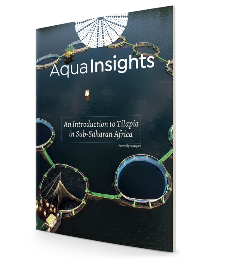 Article image for Aqua-Spark report: Tilapia aquaculture key to food security across sub-Saharan Africa