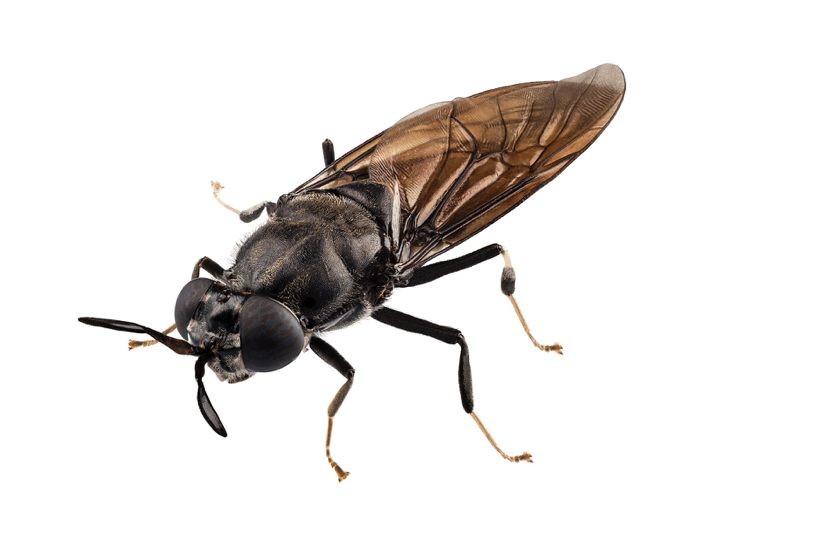 Article image for Israeli soldier fly startup accelerates growth plans with $2m raise