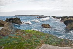 Green macroalgae aquaculture and its underexploited potential