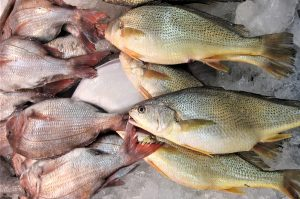 Opinion: OIE, the World Organization for Animal Health, needs seafood industry's input
