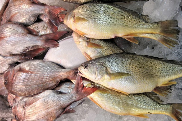 Article image for Opinion: OIE, the World Organization for Animal Health, needs seafood industry's input