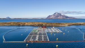 Novel formulations of aquafeeds use alternative ingredients based on sustainability