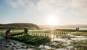 How a land-preservation easement saved a California oyster company
