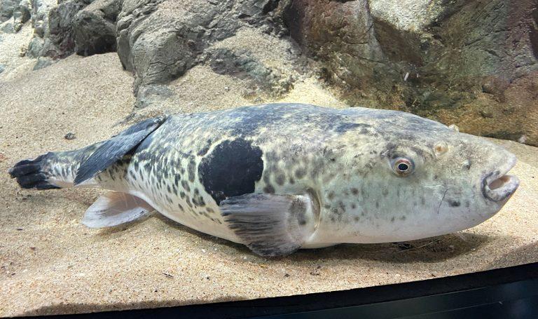 Article image for Genomas de varias especies de peces importantes en la pesca y la acuacultura mundiales