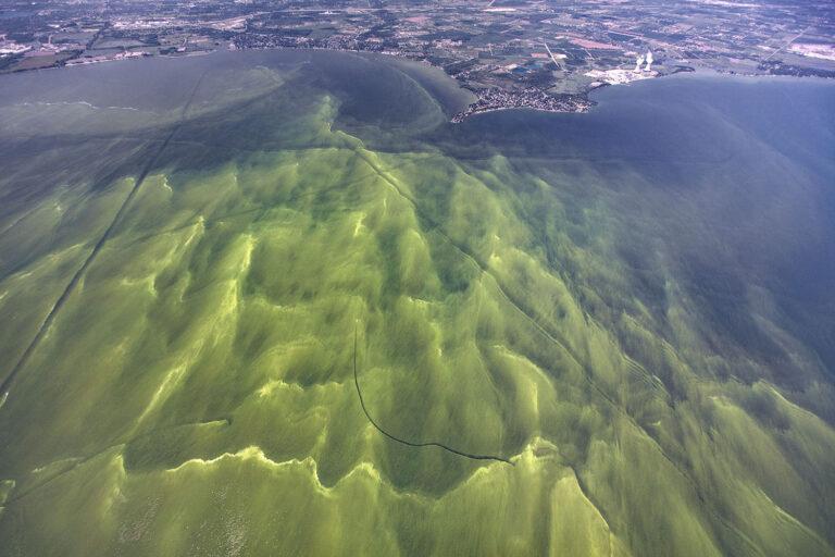 Article image for Efectos del cambio climático en la producción acuícola