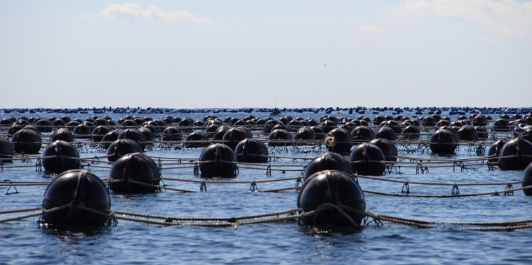 Article image for Precision bivalves: Integration of environmental data from diverse sources to support offshore bivalve aquaculture