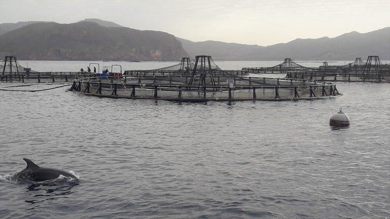 Article image for Precision sea bass: New technologies at Mediterranean Seafarms