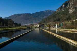 Precision trout: Optimizing oxygen for better welfare and production