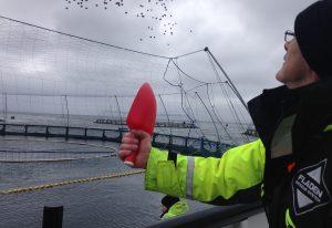 Precision salmon: Optimizing welfare through data-driven insights