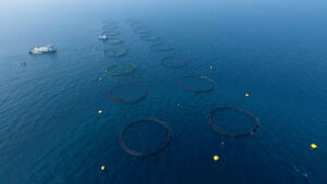 After first harvest, offshore aquaculture venture in Qatar sets fresh ambitions