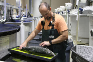RAS salmon