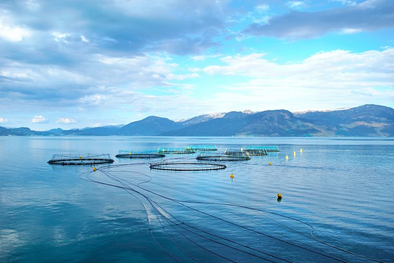 Article image for Blockchain expands its aquaculture presence with shrimp and salmon