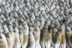 Can handheld DNA testing technology stand up to seafood fraud?
