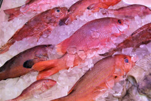 The importance of aquaculture as a source of edible animal protein