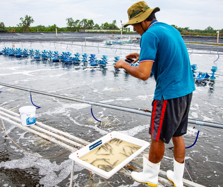 Article image for Investors see a flurry of activity putting aquaculture on fast-forward